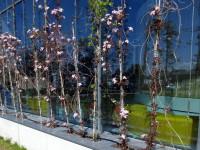 bloeiende plantenbakken gevelbeplanting