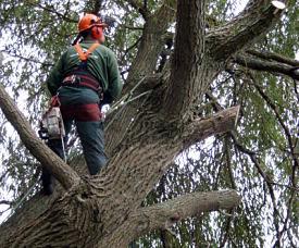 boomwerk voor vastgoedbeheerders