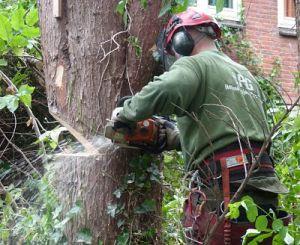 boomwerk: bomen kappen of snoeien