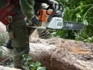 boomwerk, bomen kappen