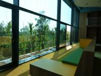 gevelbeplanting voor ramen