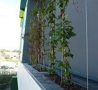 gevelbeplanting bij scholencomplex