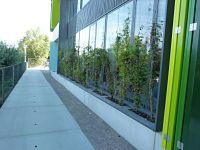 gevelbeplanting in plantenbakken