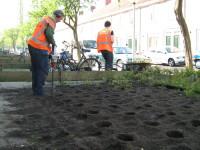 machinaal plantgaten maken voor reconstructie plantvakken