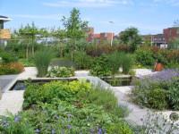 plantenrijke tuin met vijver