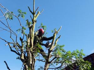 boomwerk woningbouwverenigingen