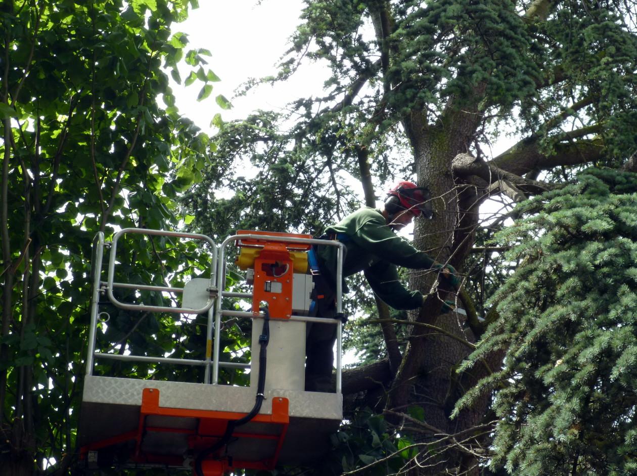 Tuinonderhoud en tuinaanleg bedrijven en kantoren for Hovenier den haag