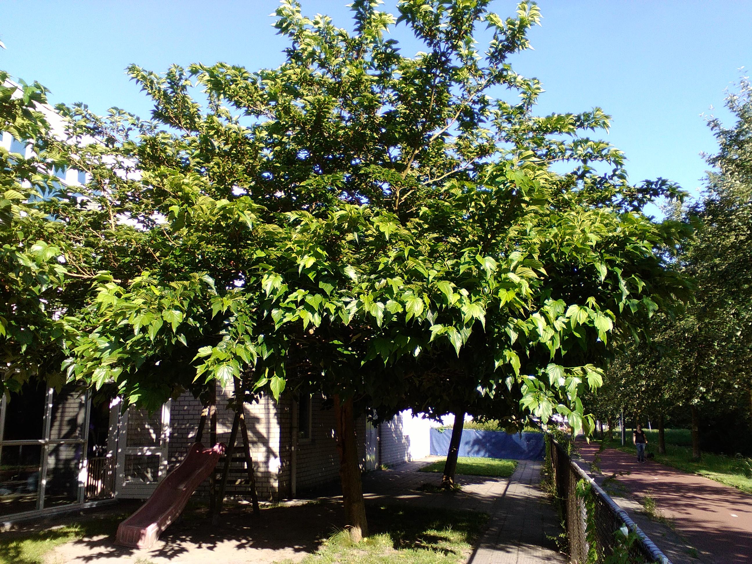 Welp Welke fruitbomen kan ik gebruiken? CV-48