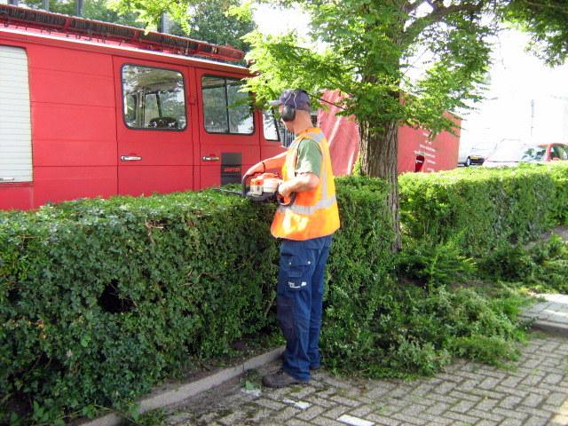 Haag snoeien ook grote hagen hpg hoveniers