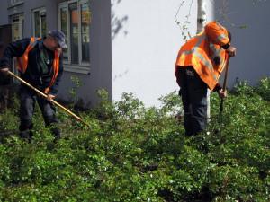 onderhoud groen, onderhoud beplantingen
