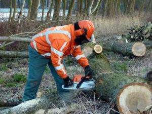 zaagwerk bij het verwijderen van stormschade