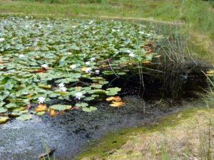 vijver als waterberging bij wateroverlast bestrijden