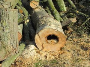 gevaarlijke boom VTA inspectie nodig