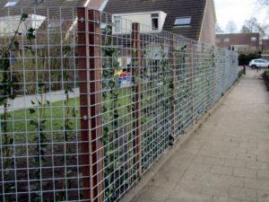 tuinafscheiding van bouwstaalmatten en klimop