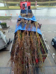 aanleg groen: planten bomen