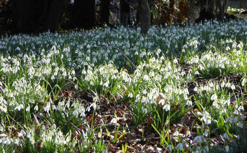 Bollen Bloeiend Voorjaar : Welke bollen kan ik planten hpg hoveniers geeft advies