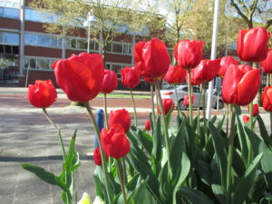 bloembollen in plantenbak