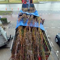 boomkluiten afzeilen bij transport
